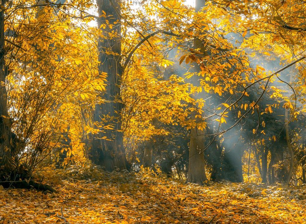 automne en vendée