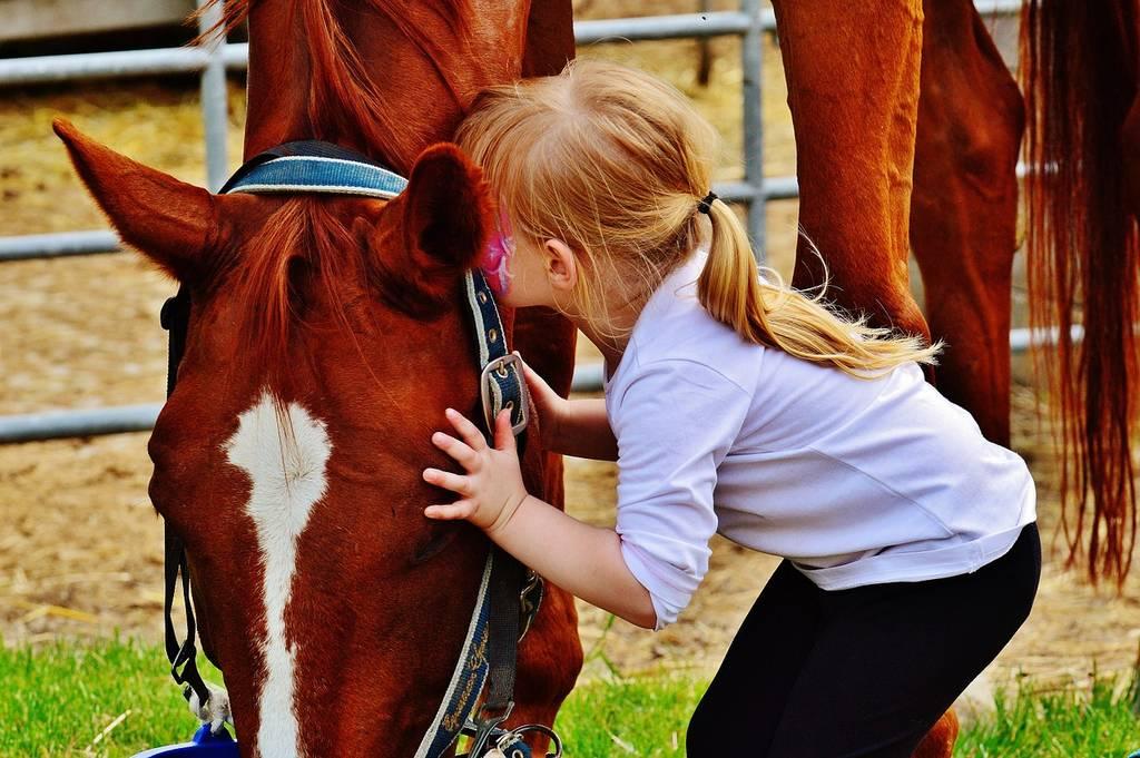 Activité cheval pour des vacances au gite de la Gravée en sud Vendée