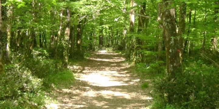 La forêt de Mervent en sud Vendée, balade à l'ombre des arbres pour un été chaud en Vendée