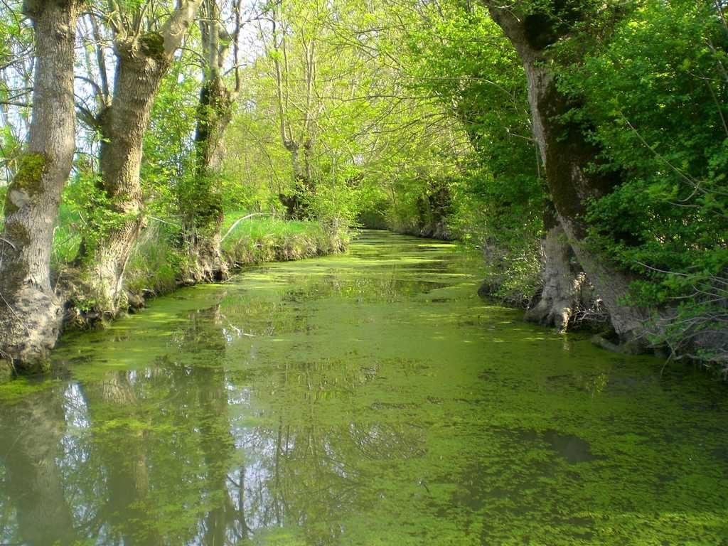 Vacances en Vendée, le Marais Poitevin