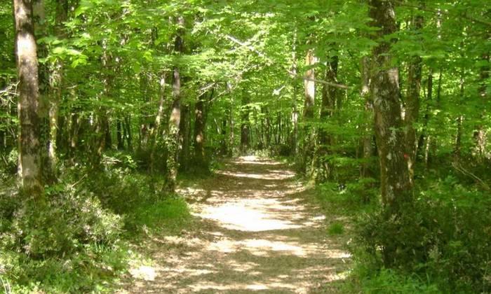 vacances en Vendée : forêt de Mervent
