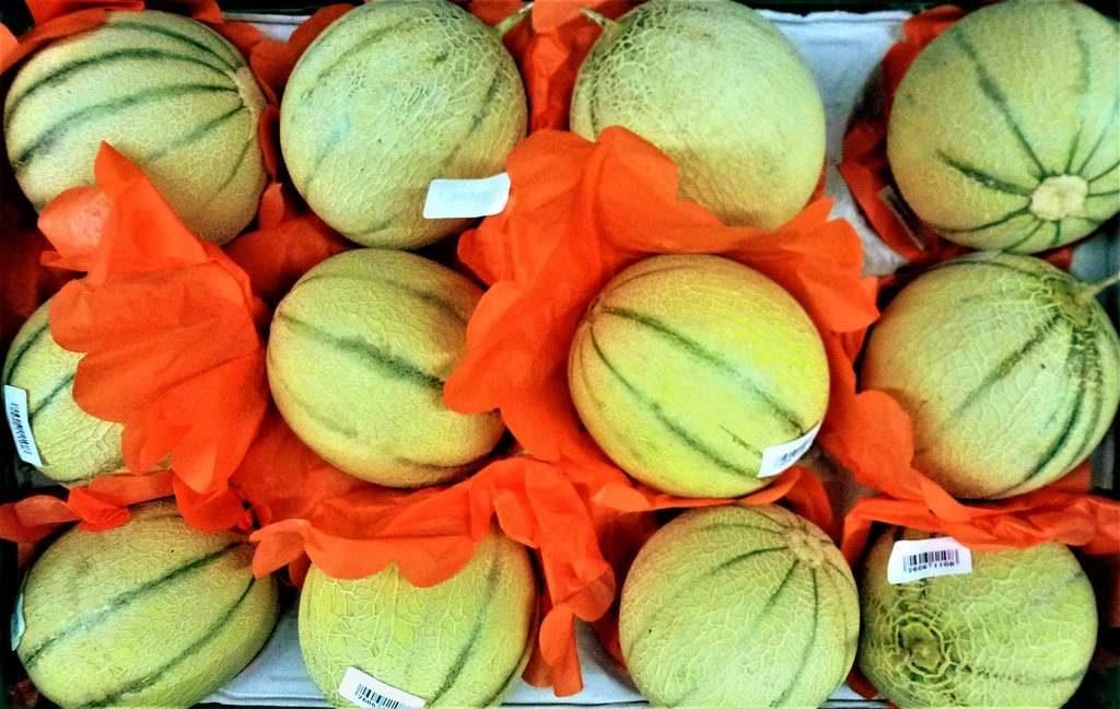 Eté chaud au gite de la Gravée : mangez des melons de Vendée pour vous désaltérer