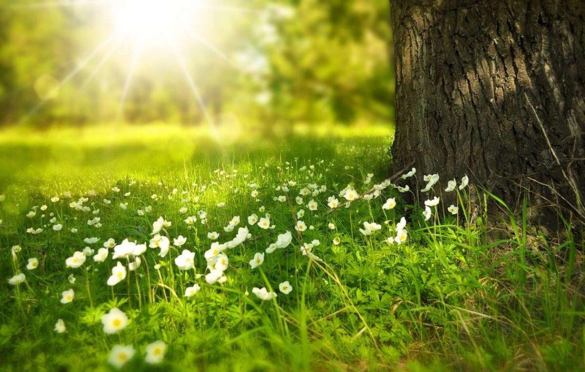 Passez des vacances proches de la nature au gite de la Gravée