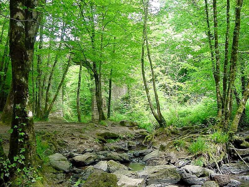 Des vacances nature au coeur de la forêt de Mervent